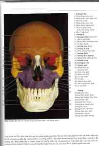 ảnh minh họa từ atlas giải phẫu trên xác